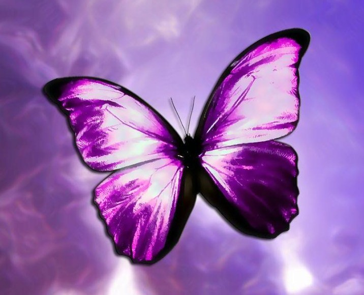 Look For The Butterfly Kirbas Institute